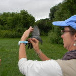 6. Trish O'Kane with Catbird in Geolocation Study (Jim Carrier)